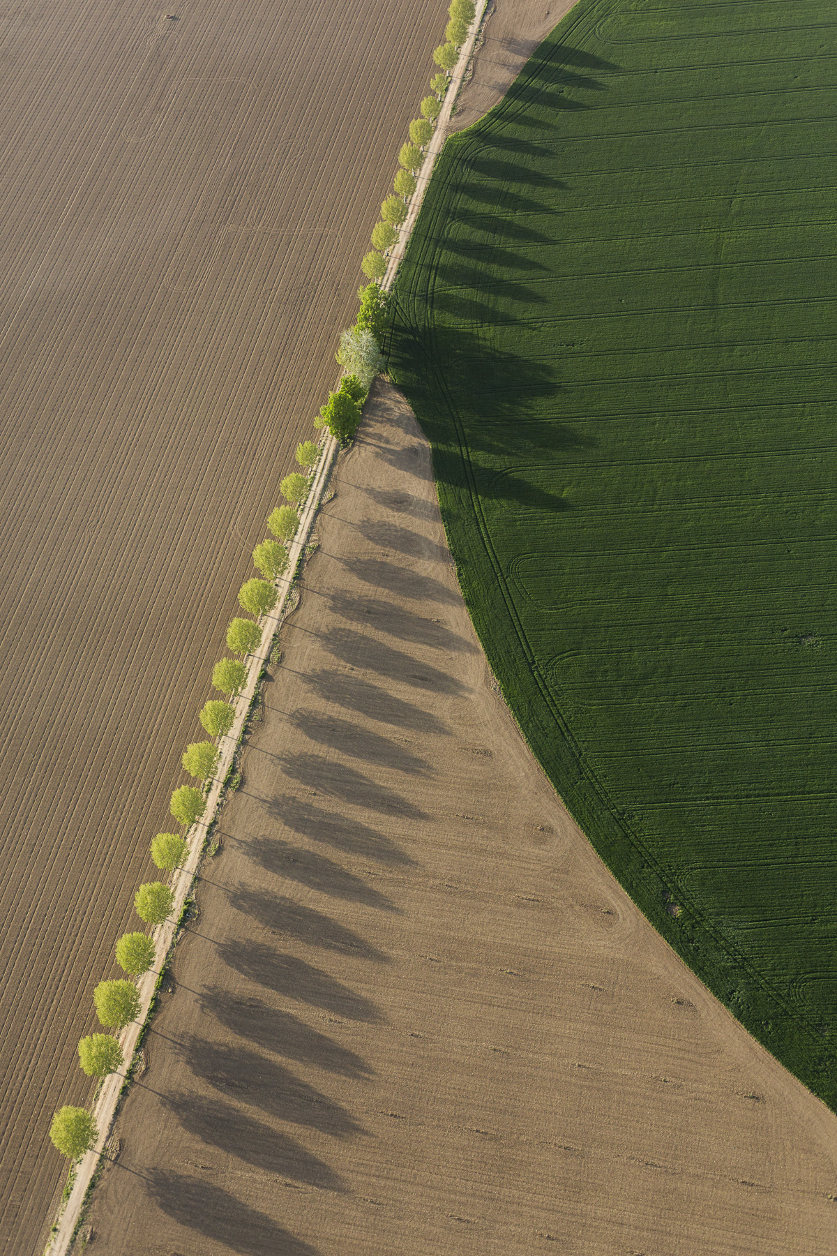 pivot irrigation and road with treesm Aerial views, farming, Algodor, Spain